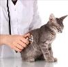 Ветеринарные клиники в Карпинске